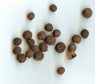 picture of Allspice