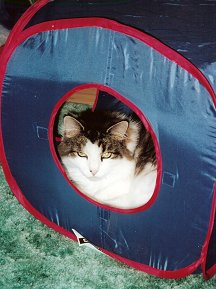 K C sleeping in cat tunnel